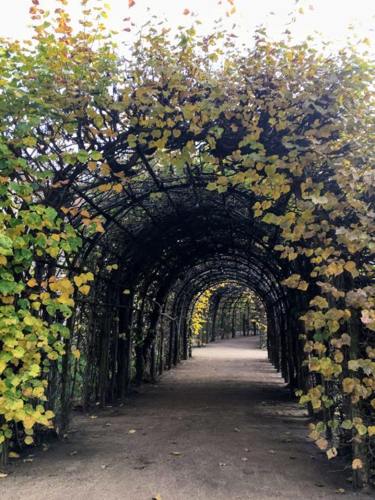 木の葉のトンネル