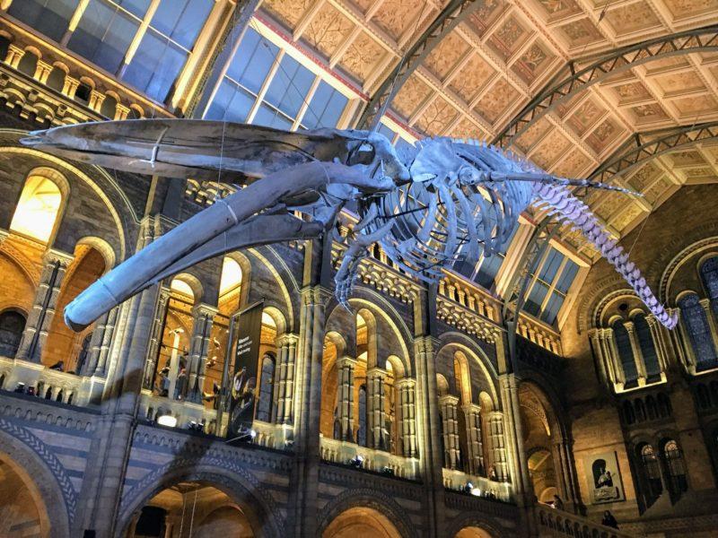ロンドン自然史博物館内の標本