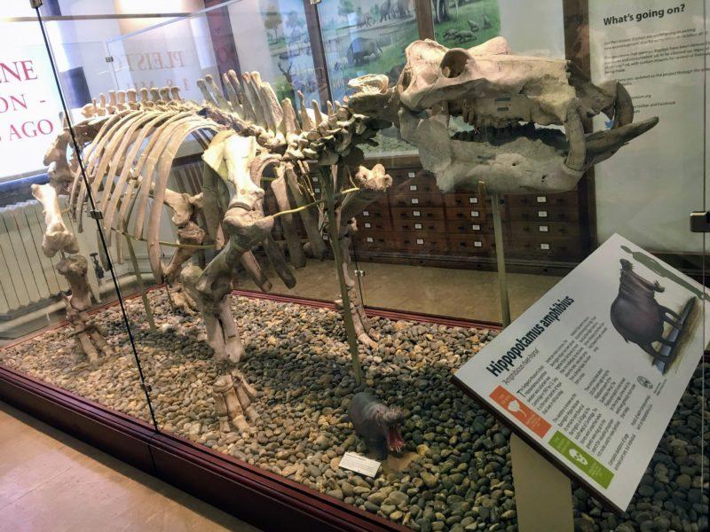 動物学博物館内の標本
