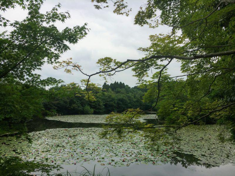 龍安寺の鏡容池