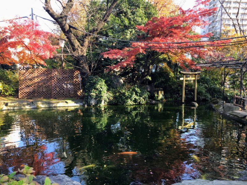 愛宕神社境内にある池