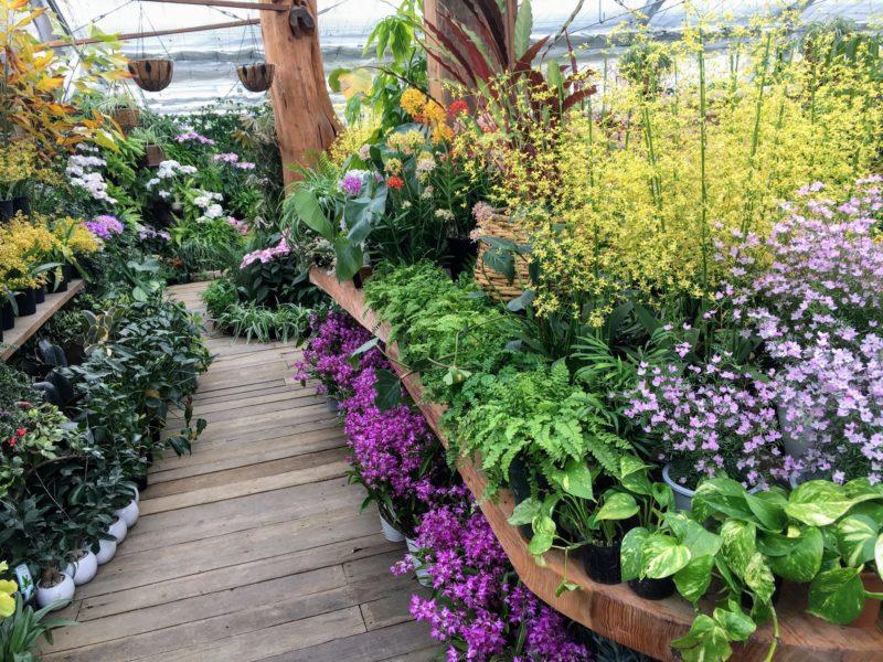 ハーブ庭園 旅日記 富士河口湖庭園の温室内